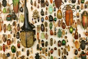 Exposición de insectos en el Museo Te Papa. Autor limaoscarjuliet de Flickr.
