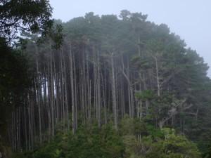 Naturaleza de Karori. Autor Teacher Traveler de Flickr.