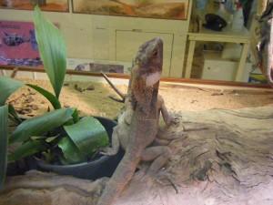 Centro de Reptiles. Autor c_neuhaus de Flickr.