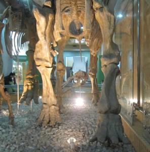 Museo Historia Natural. Autor IvanWalsh.com de Flickr.