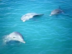 Dolphin Cove. Autor Liline sur Flickr de Flickr.