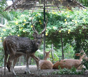 Zoo. Autor  Ahmed Rabea de Flickr.