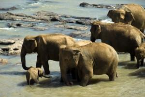Elephants. Autor Mal B de Fickr.
